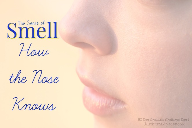 The Sense of Smell and How the Nose Knows