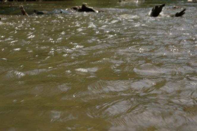 Creeking (10 of 21)