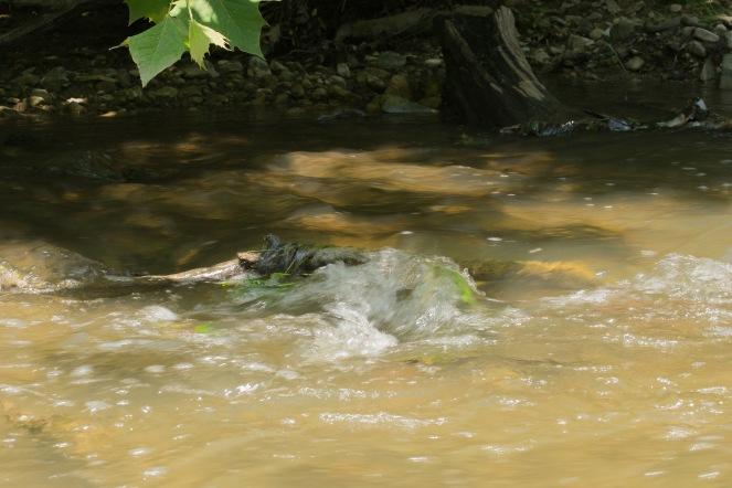 Creeking (12 of 21)